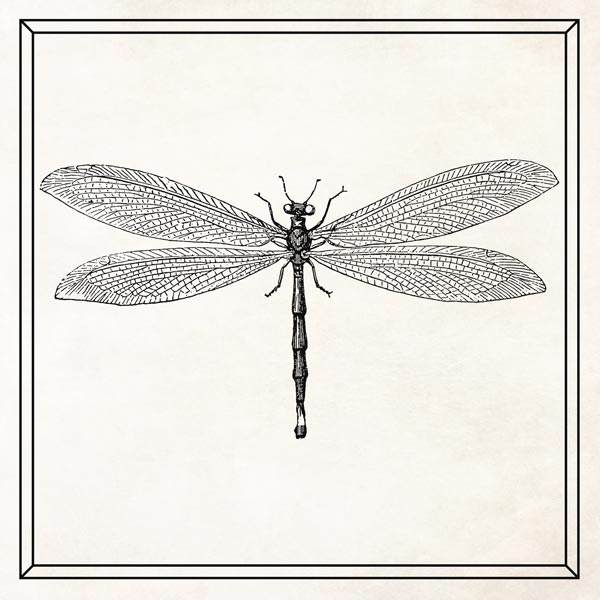 Dragonfly Wall Art, Large Insect Art, Gift for Entomologist – Personalized for Simon J.
